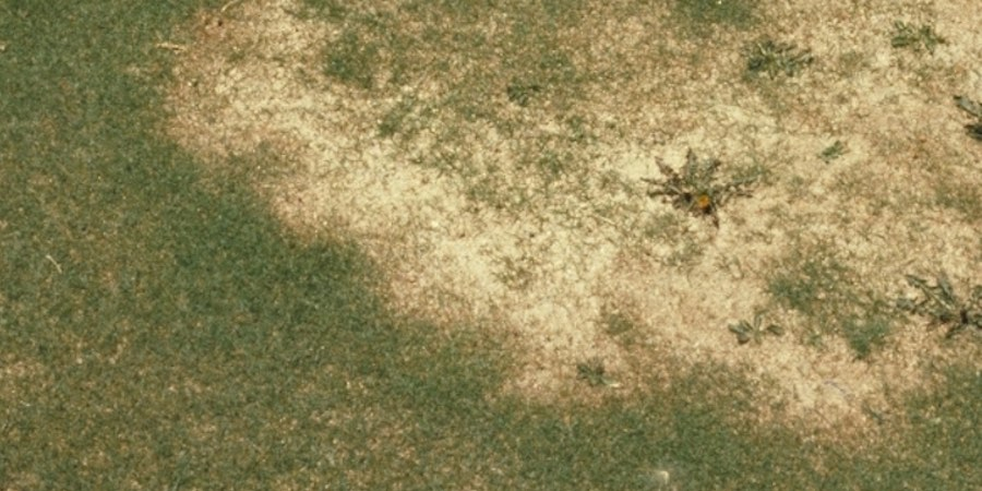 Take All Root Rot In St Augustine Grass